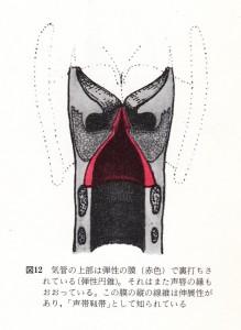 フースラー 図 12