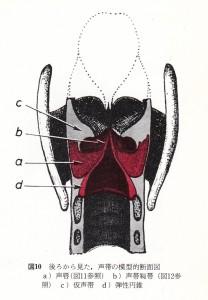 フースラー 図 10