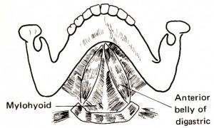 舌骨上筋前1