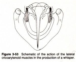 fig.3-53 lateral cricoarytenoid