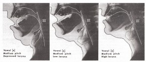 Fig. 47a Three Positions of the Larynx for Ah