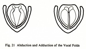 Fig. 21 Abduction and Adduction of the Vocal Folds